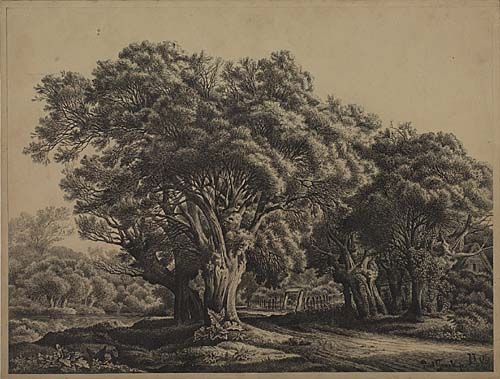 PAUL GRAEB (Berlin 1842-1892 Berlin) A Wooded Landscape with a Path Between Old Trees. Pen and black ink on heavy cream wove paper. 326x429 mm; 12x16 inches. Signed and initialed in ink, lower right recto.