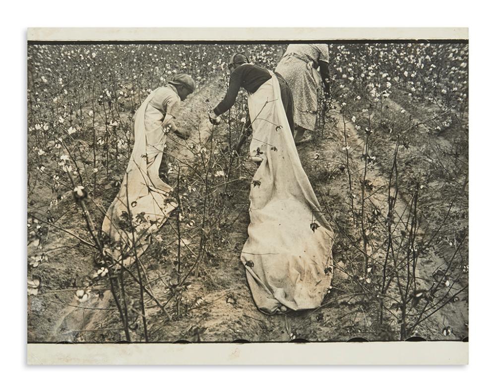 (PHOTOGRAPHY.) Shahn, Ben; photographer. [Cotton Pickers, Pulaski County, Arkansas.]