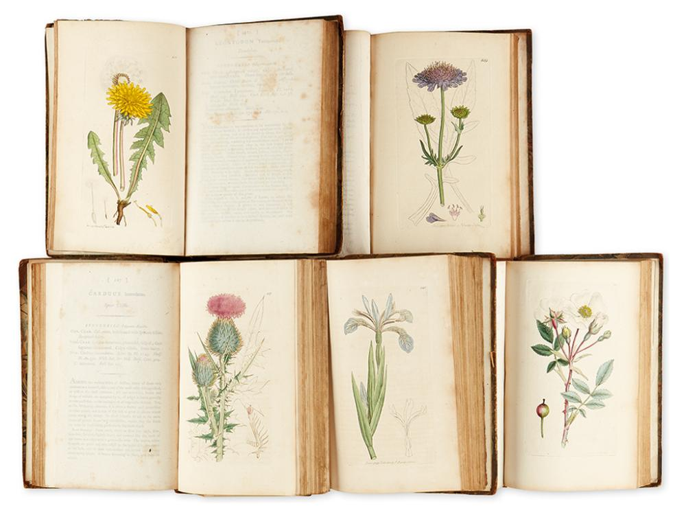 (BOTANICAL.) Sowerby, James; and Smith, James Edward. English Botany; or, Coloured Figures of British Plants.