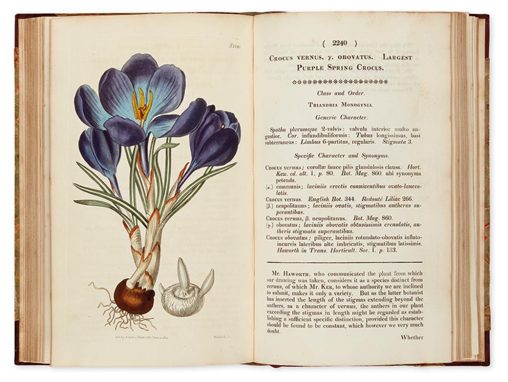 CURTIS, WILLIAM. Curtis''s Botanical Magazine; or, Flower-Garden Displayed. Vol. XLVIII.