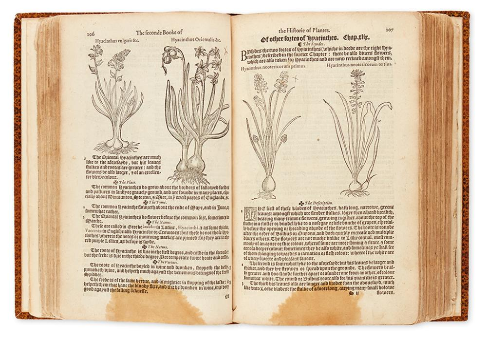 DODOENS, REMBERT. A Nieuwe Herball or Historie of Plantes... Nowe Translated Out of French Into English.