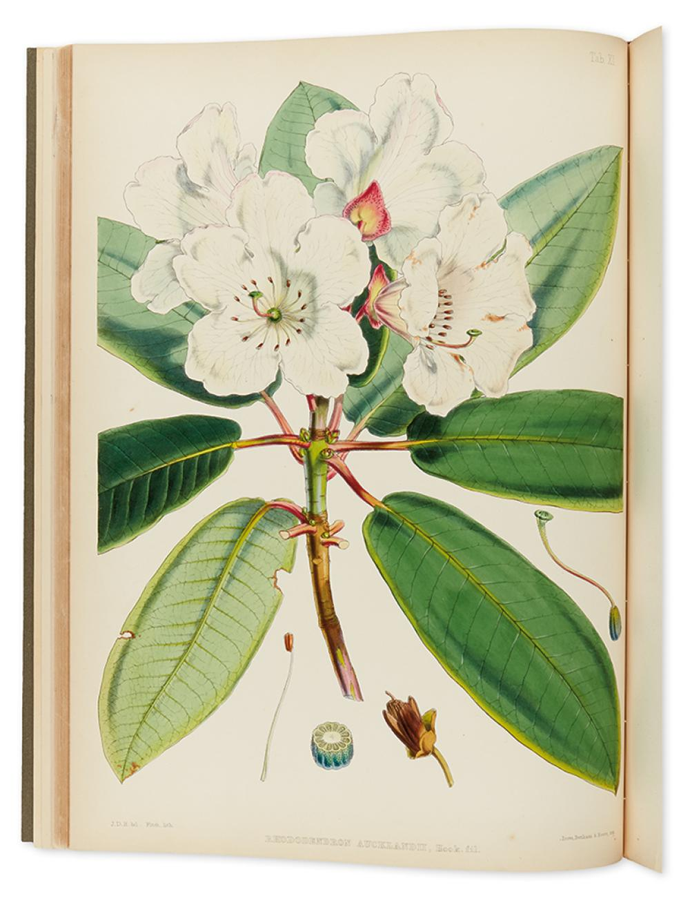 HOOKER, SIR JOSEPH DALTON. The Rhododendrons of Sikkim-Himalaya; Being an Account, Botanical and Geographical of the Rhododendrons