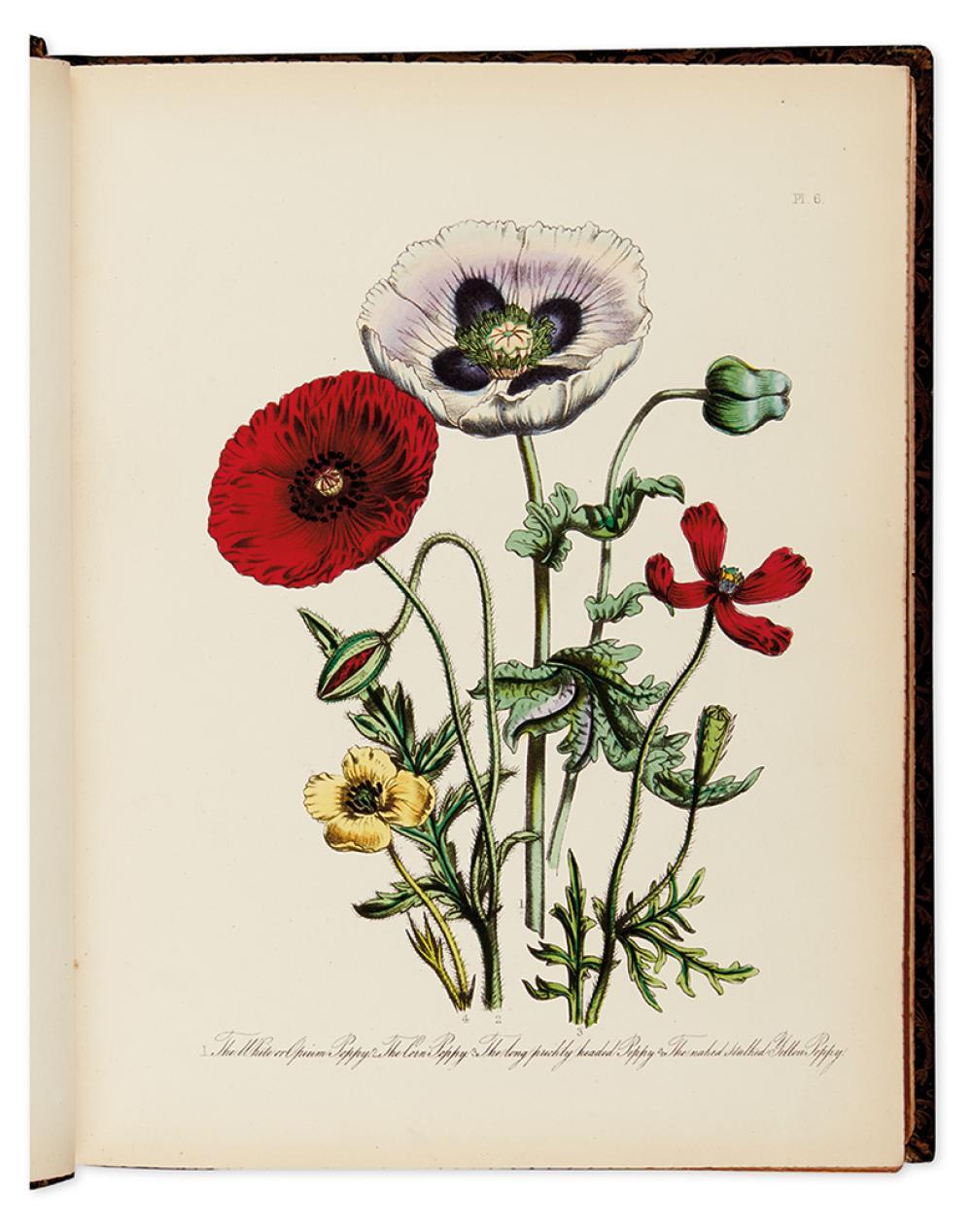 LOUDON, JANE WELLS. British Wild Flowers.
