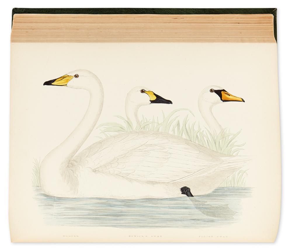 MORRIS, BEVERLEY R. British Game Birds and Waterfowl.