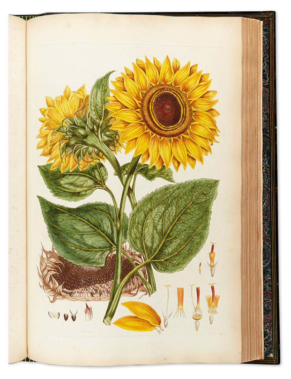 MILLER, JOHN. Illustratio Systematis Sexualis Linnaei... An Illustration of the Sexual System of Linnaeus.