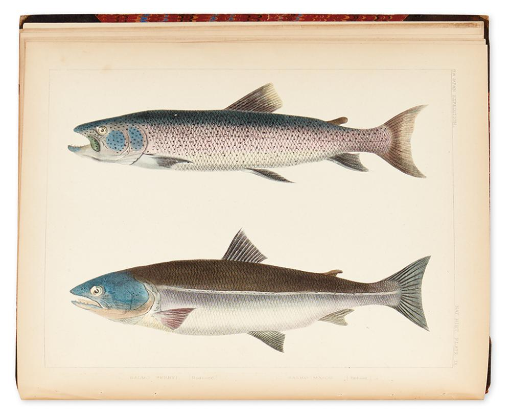 (NATURAL HISTORY - FISH.) Brevoort, James Carson. Notes on Some Figures of Japanese Fish Taken from Recent Specimens