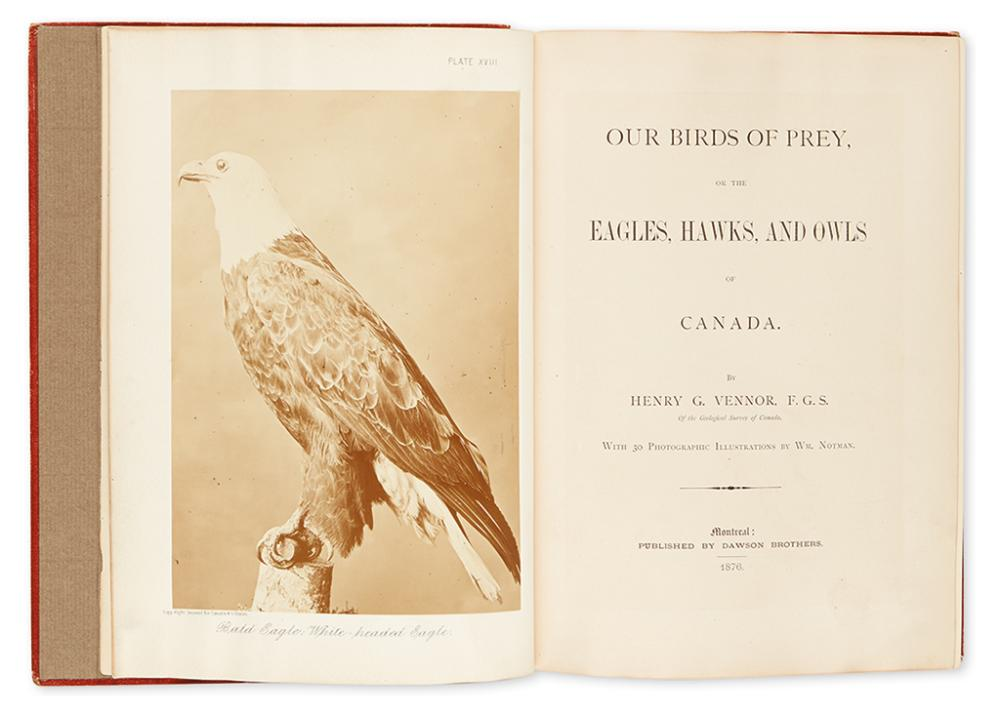 VENNOR, HENRY G. Our Birds of Prey, or the Eagles, Hawks, and Owls of Canada.