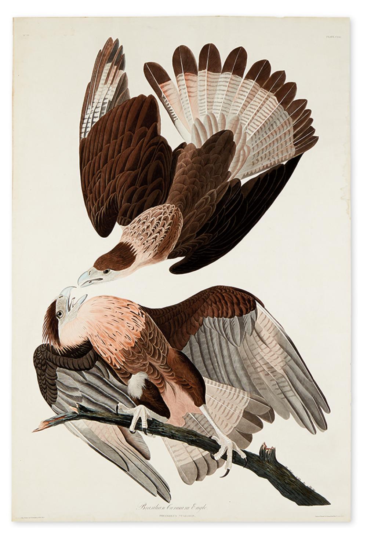 AUDUBON, JOHN JAMES. Brasilian Caracara Eagle. Plate CLXI.