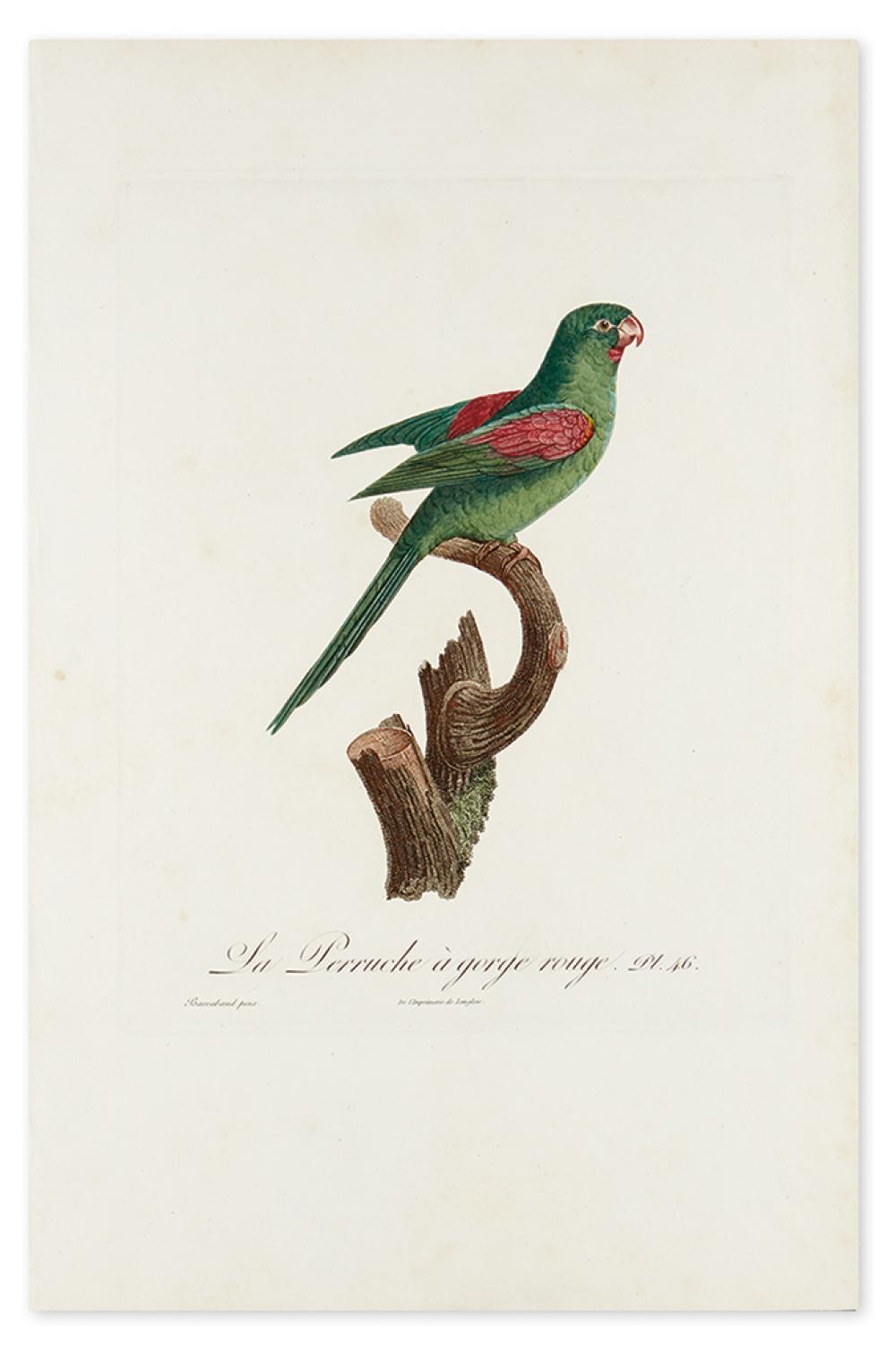 BARRABAND, JACQUES. La Perruche à Gorge Rouge. Pl. 46.