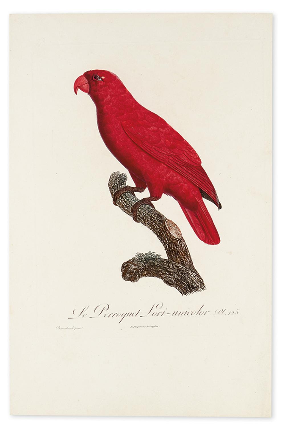 BARRABAND, JACQUES. Le Perroquet Lori-unicolor. Pl. 125.