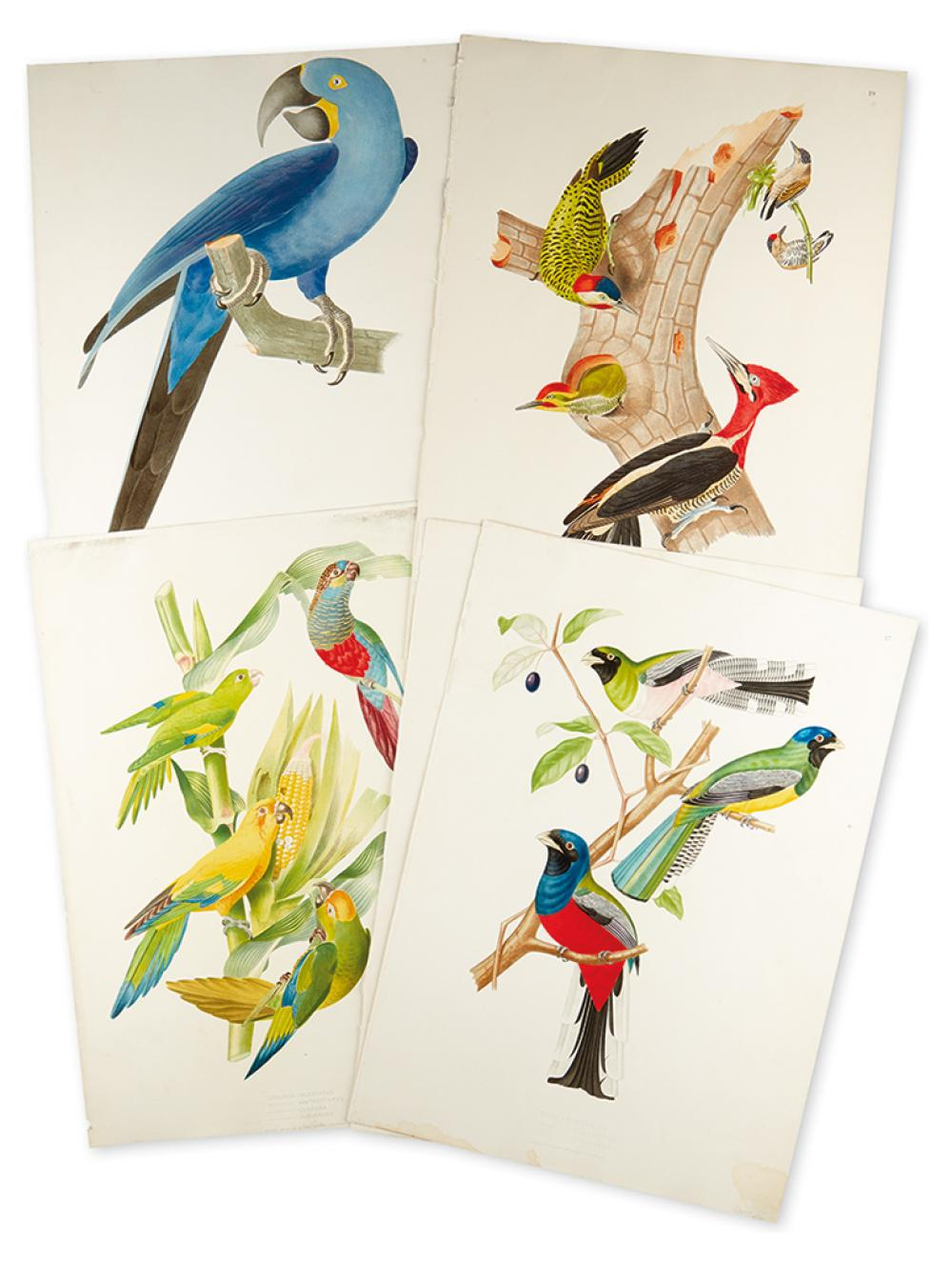 DESCOURTILZ, JEAN THEODORE. Five hand-finished chromolithographed plates of Brazilian birds,