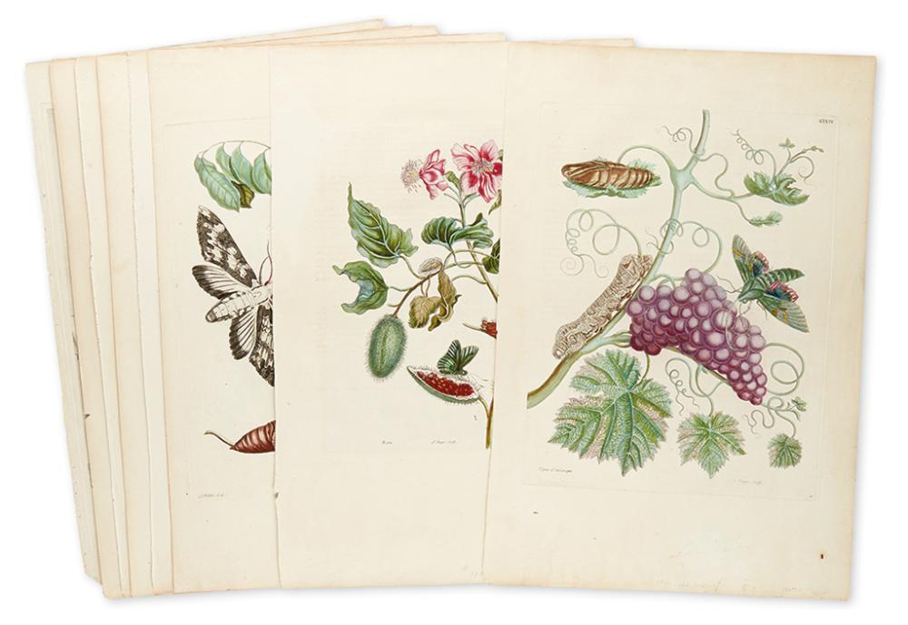 MERIAN, MARIA SIBYLLA. Nine hand-colored engraved plates,