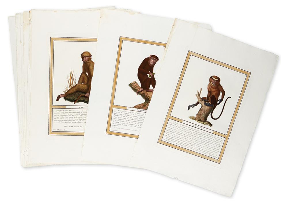 (MONKEYS.) Jacob, Nicolas Henri. Nine finely hand-colored engravings of monkeys,