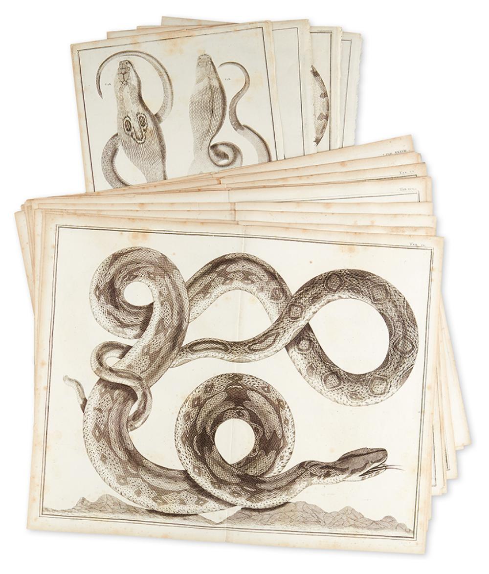 SEBA, ALBERTUS. Sixteen engraved plates featuring snakes,