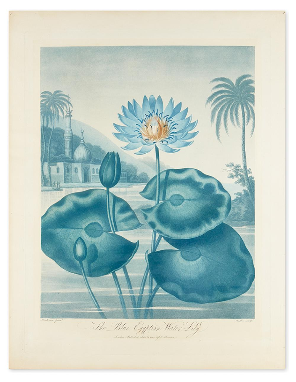 THORNTON, ROBERT JOHN. The Blue Egyptian Water-Lily.