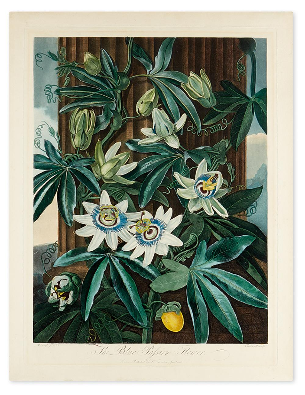 THORNTON, ROBERT JOHN. The Blue Passion Flower.