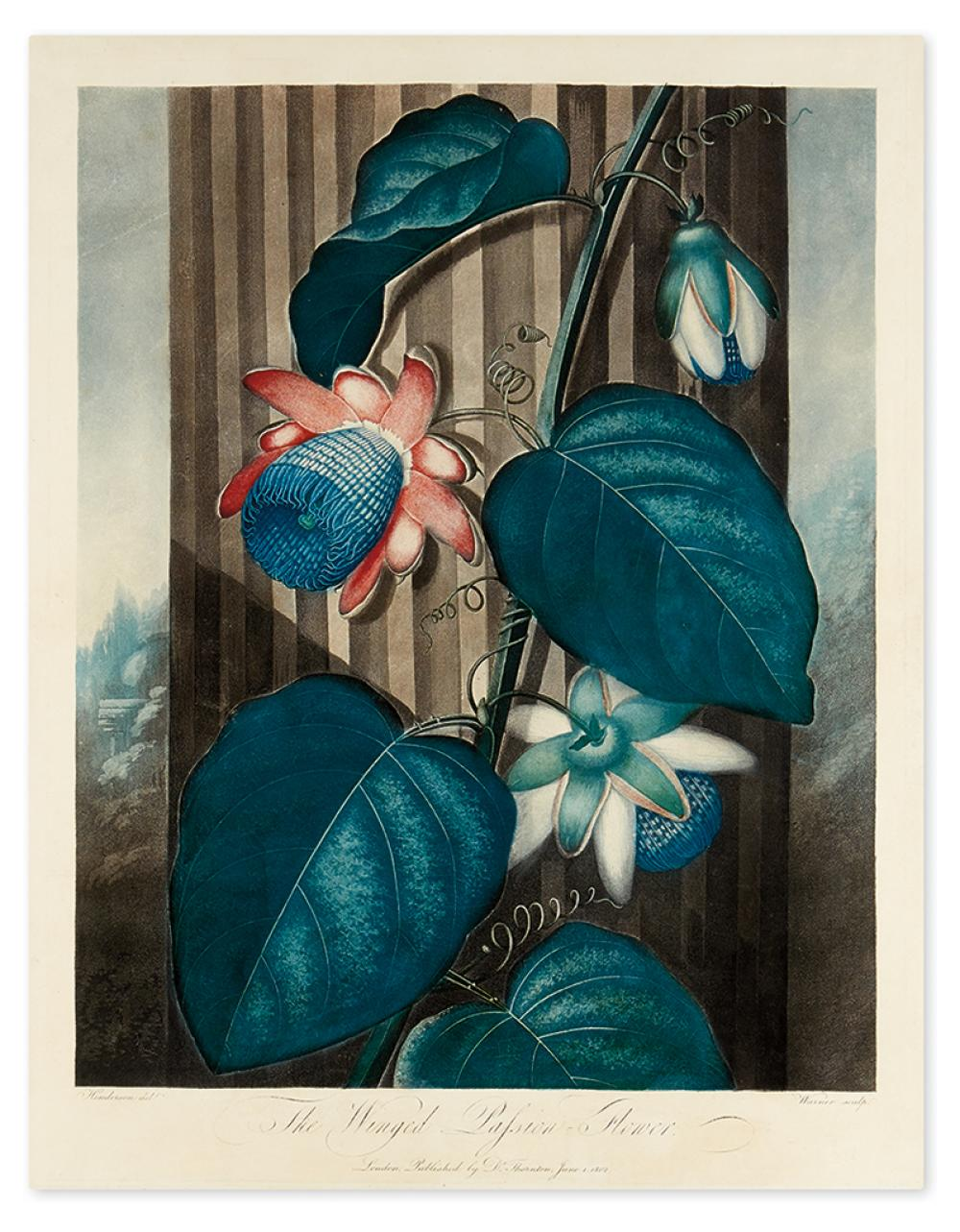 THORNTON, ROBERT JOHN. The Winged Passion-Flower.