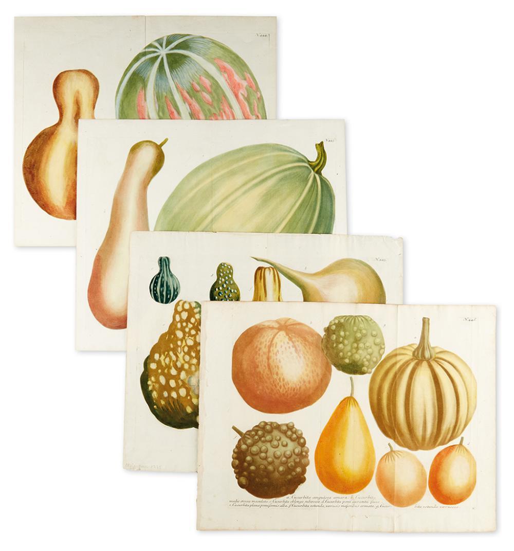 WEINMANN, JOHANN. Set of four mezzotints of gourds,