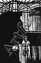 GIBSON, RALPH (1939- ) Portfolio titled