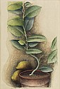 LUIGI RIST Ida's Lemon Tree.