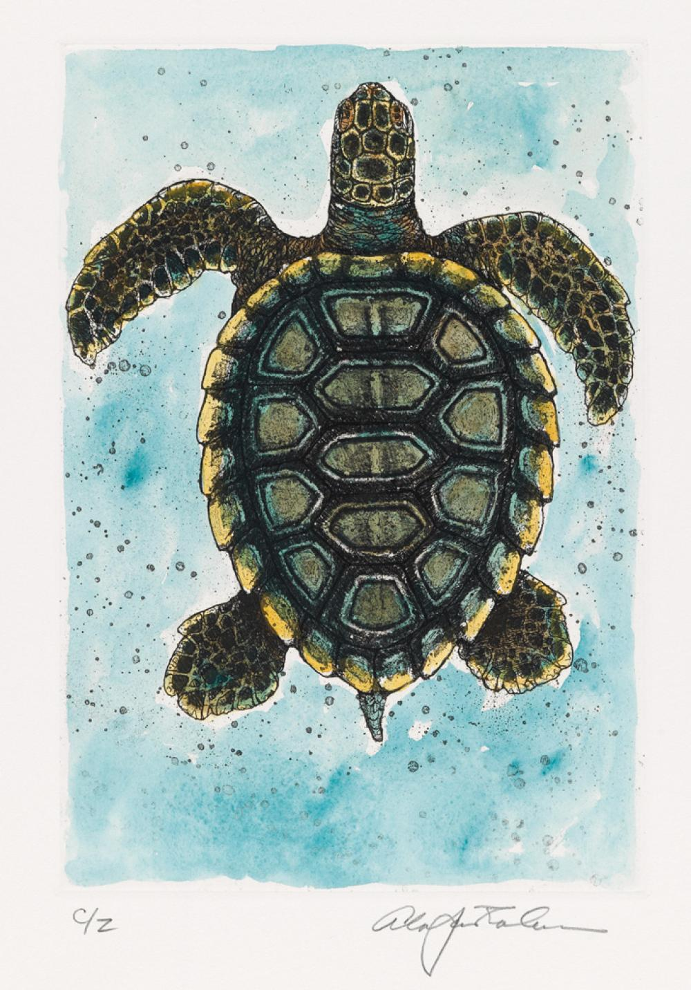 (CHELONIIDAE PRESS.) Goodrich, S. G. Cheloniidae: Sea Turtles.