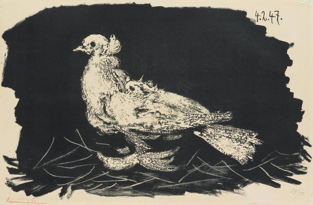 PABLO PICASSO Pigeon blanc, fond noir.