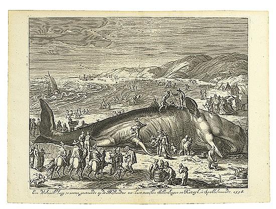 WILLEM VAN GOUWEN A Beached Whale between Scheveningen and Katwijk.