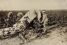 HINE, LEWIS W. (1874-1940) Cotton picker.