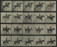 EADWEARD MUYBRIDGE (1830-1904) Horse clearing a hurdle, plate 637 * Pelican landing, plate 775 * Ostrich running, plate 772, from Anima