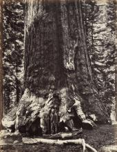 (CALIFORNIA.) The Yosemite Book; A Description of the Yosemite Valley and the Adjacent Region of the Sierra Nevada, and of the Big Tree