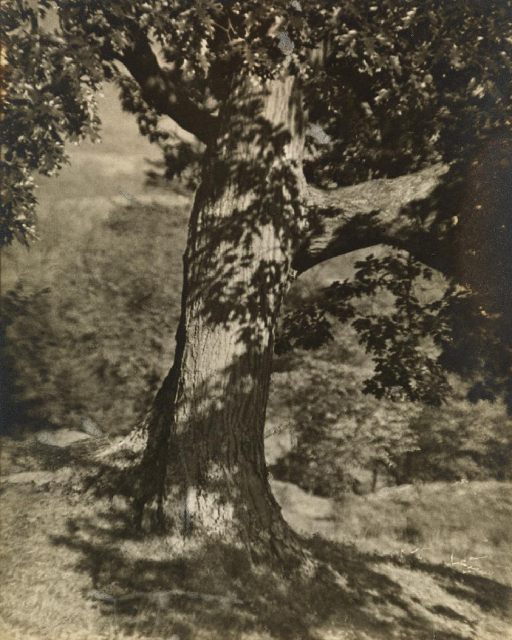 GEORGE H. SEELEY (1880-1955) Group of 11 Pictorialist photographs.