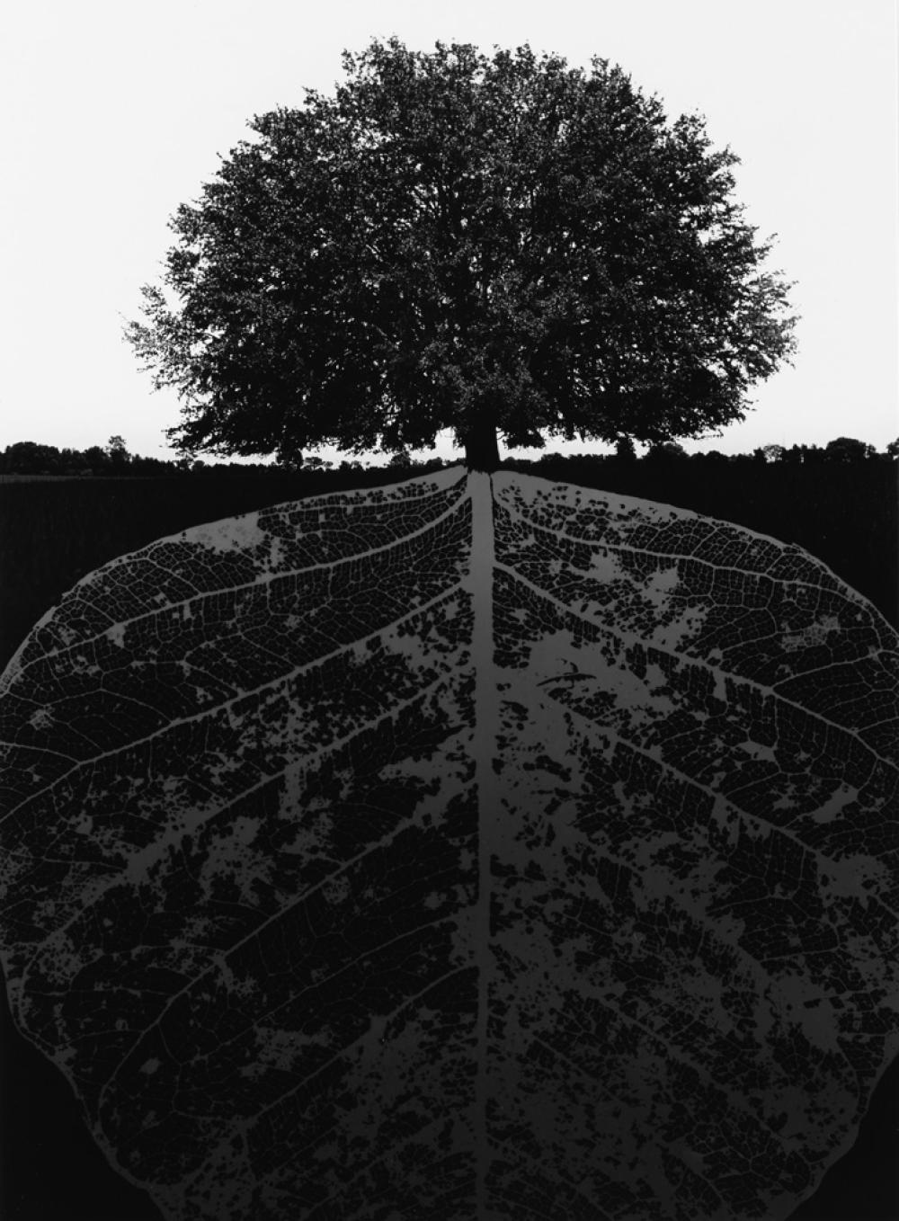JERRY UELSMANN (1934- ) Tree and mirrored leaf.