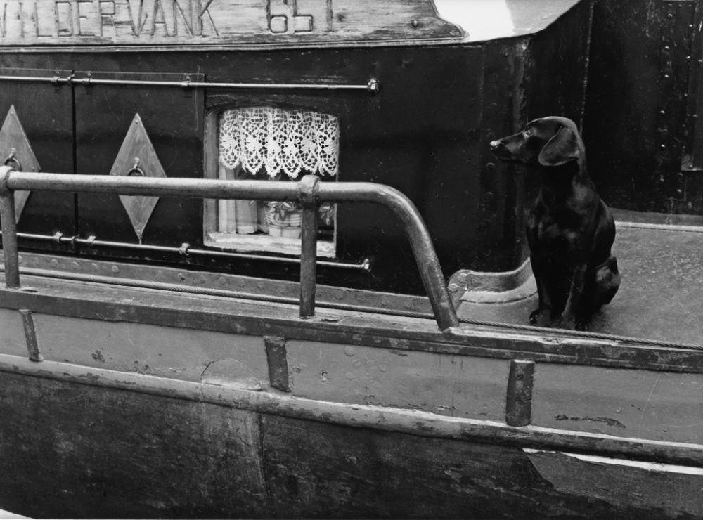 MANUEL ALVAREZ BRAVO (1902-2002) Dog on a houseboat.