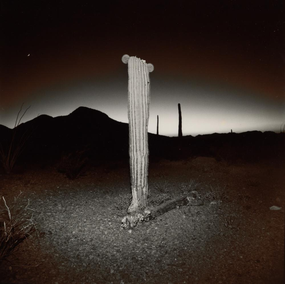 RICHARD MISRACH (1949- ) Desert Cactus.