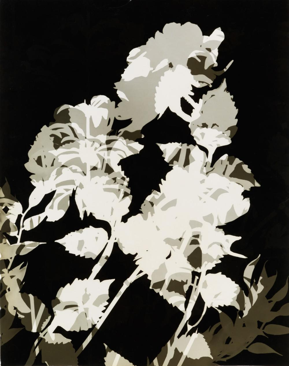 (PHOTOGRAMS) Group of 8 abstracted photograms of cut-out paper flowers.