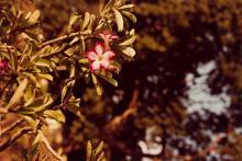 WILLIAM EGGLESTON (1939- ) Untitled (pink flowers).