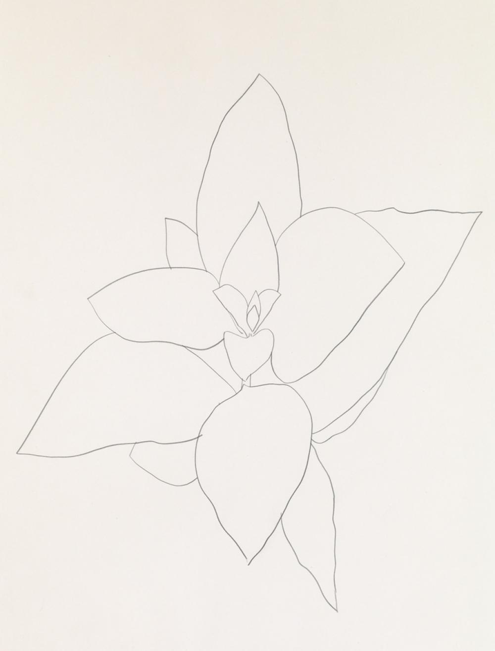 ELLSWORTH KELLY Milkweed.