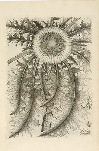 ALLIONI, CARLO.  Flora Pedemontana; sive, Enumeratio methodica stirpium indigenarum Pedemontii.   2 engraved frontispiece portraits of the dedicatee,