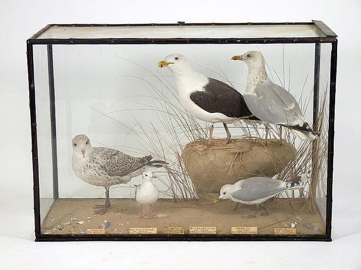 A Gull case by Rowland Ward, London, including