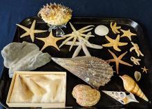 Lot 2A: Lot of Sea Shells