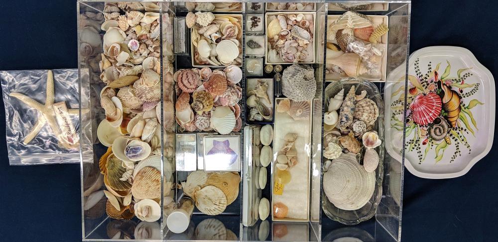 Lot 88A: Lot of Sea Shells