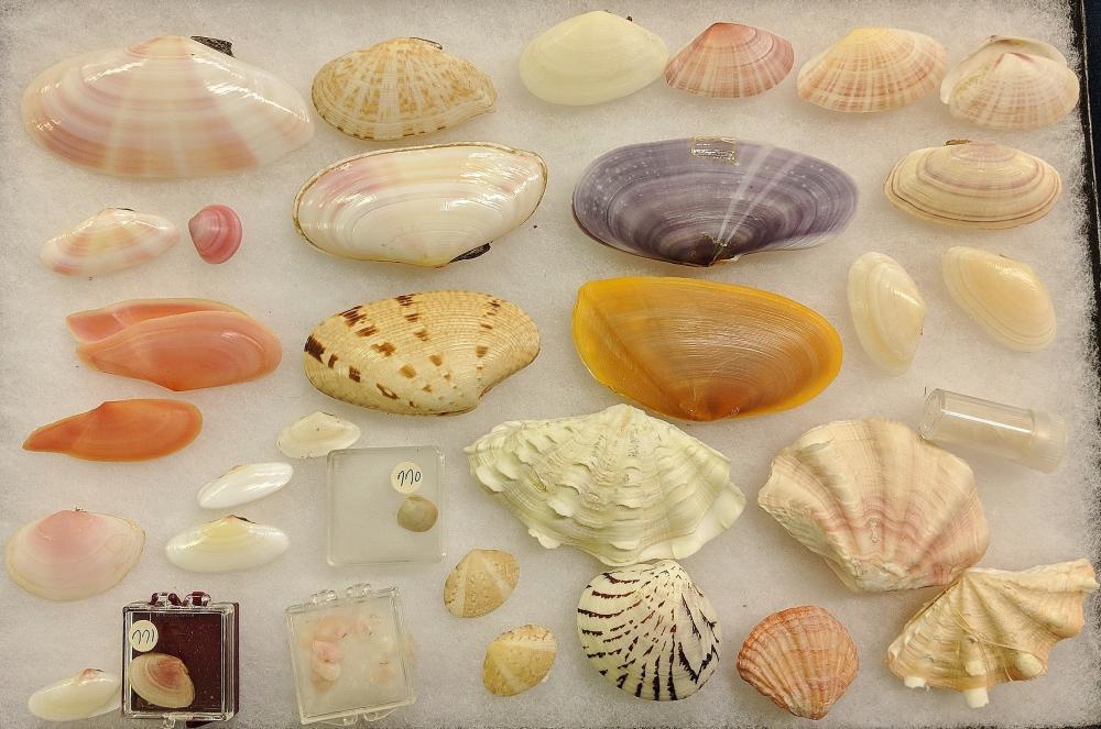Lot of Sea Shells