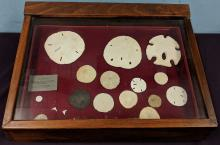 Lot 135A: Case of Sand Dollars