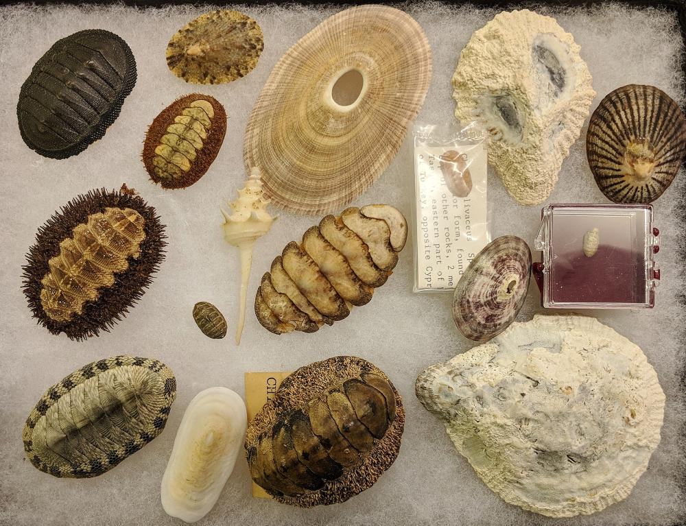 Lot of Fossils