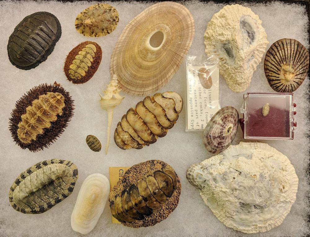 Lot 108A: Lot of Fossils