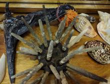 Lot 85B: Lot of Sea Shells