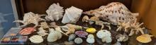 Lot 23A: Lot of Sea Shells