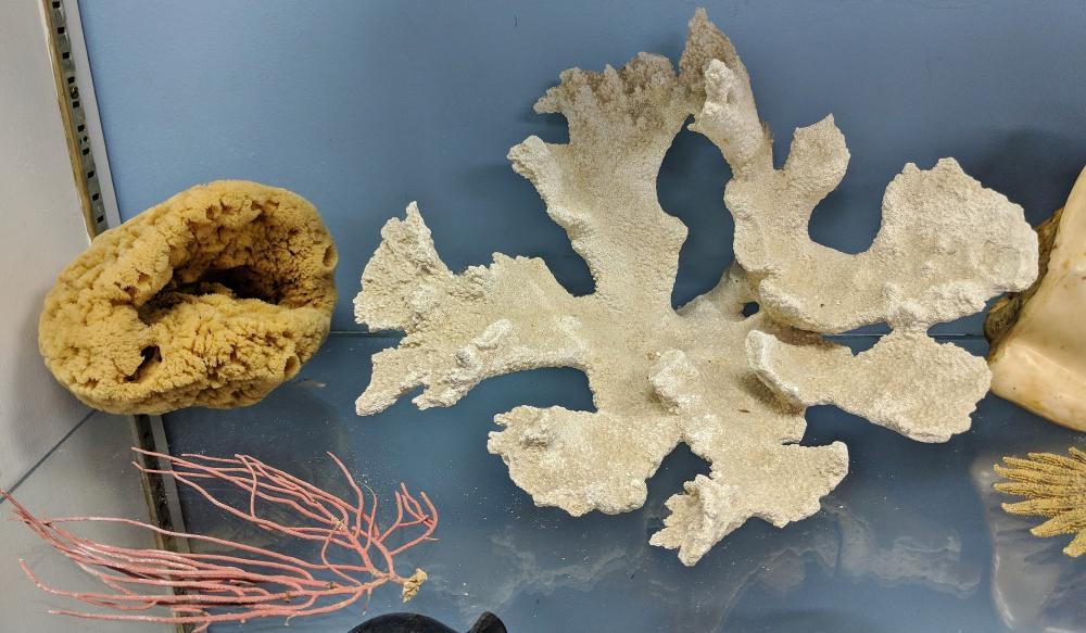 Lot 113A: Lot of Sea Shells & Coral
