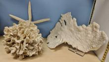 Lot 128A: Lot of Coral & Star Fish