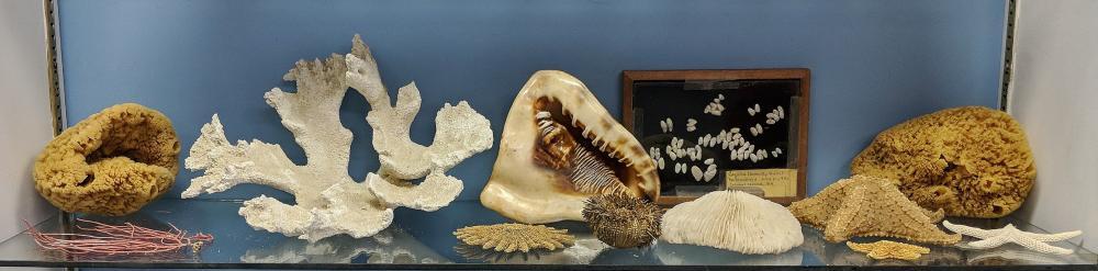 Lot of Sea Shells & Coral